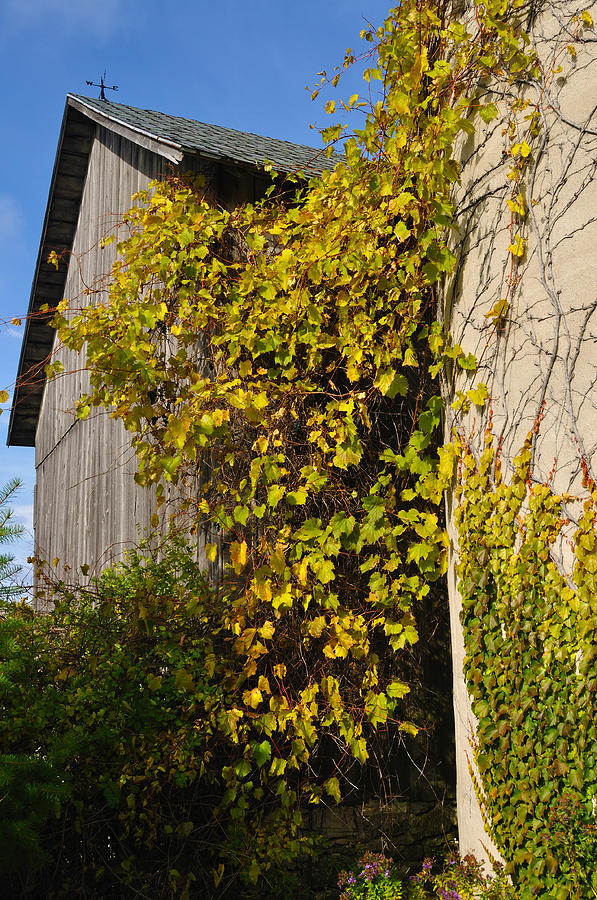 Silo Photograph - Vined Silo by Tim Nyberg