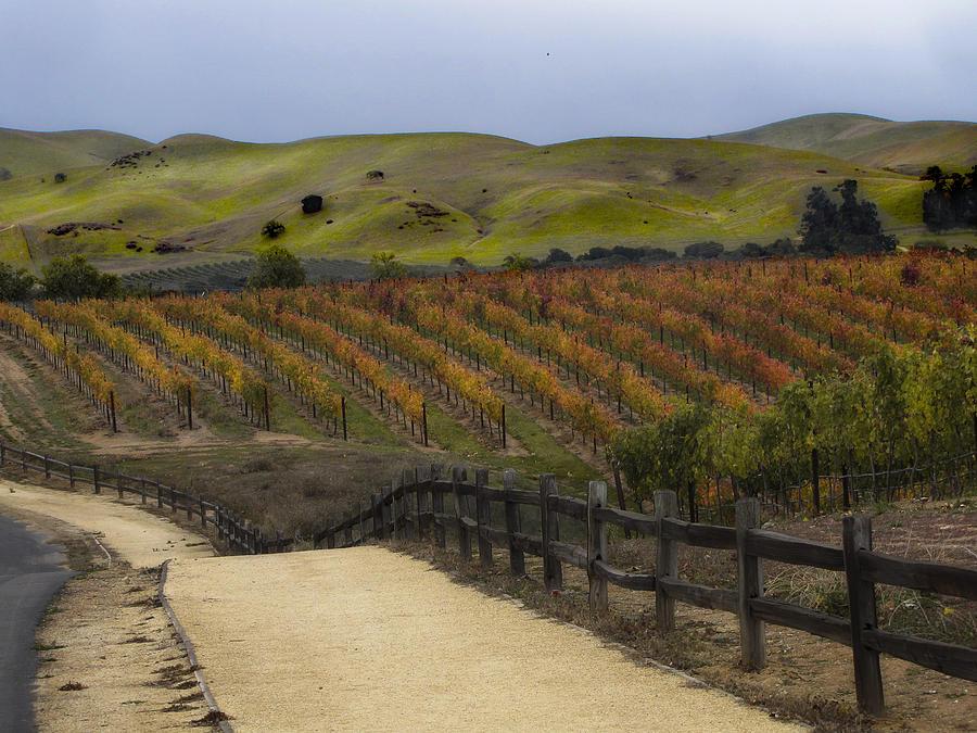 Landscape Photograph - Vineyard 2 by Karen  W Meyer