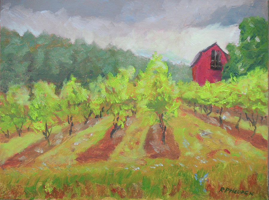Vineyard at Cape Winery by Robert P Hedden