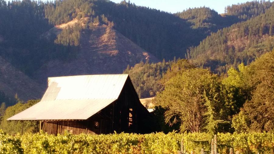 Vineyard Barn by Liz Snyder