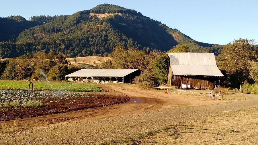Vineyard Barns by Liz Snyder