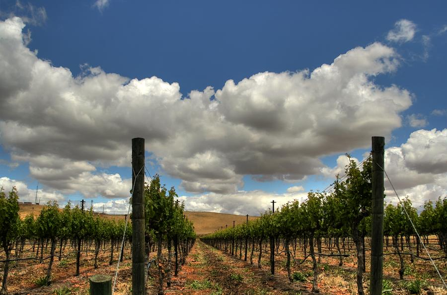 Vineyard Photograph By Douglas Shier