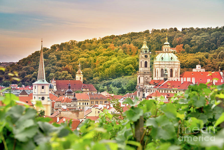 Prague Photograph - Vineyard Of Prague by Delphimages Photo Creations