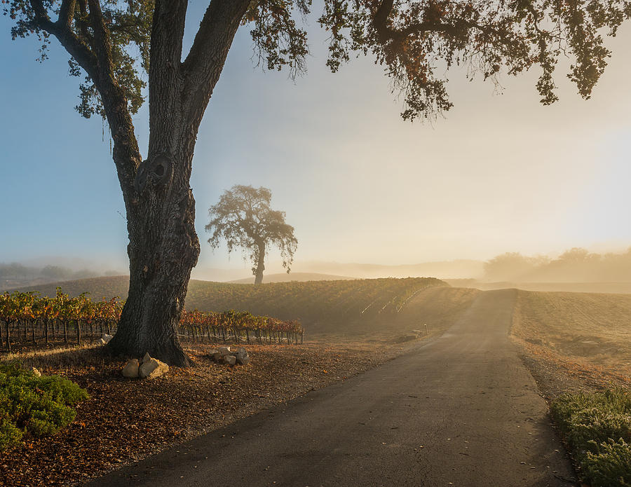 Paso Robles Photograph - Vineyard Road by Joseph Smith