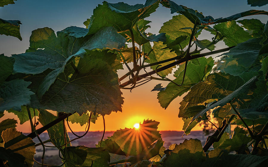 Germany Photograph - Vineyard Sunset by Framing Places