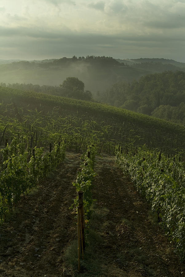 Vineyards Photograph - Vineyards Along The Chianti Hillside by Todd Gipstein