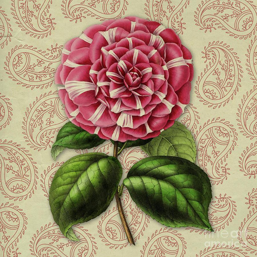 Vintage Botanical Pink Flower Camellia Japonica Digital Art By Amy