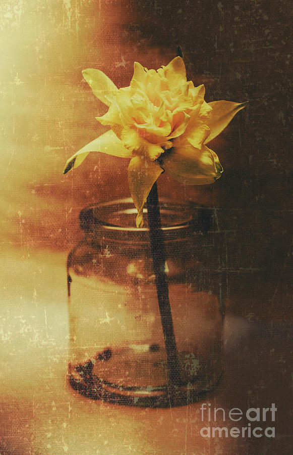 Vintage Photograph - Vintage Daffodil Flower Art by Jorgo Photography - Wall Art Gallery