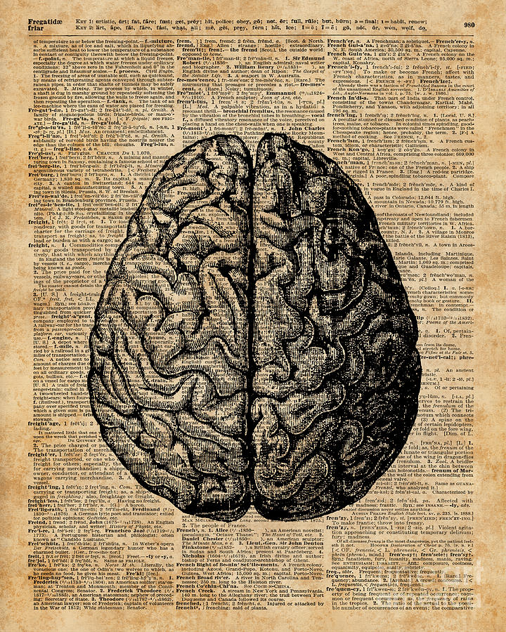 Vintage Human Anatomy Brain Illustration Dictionary Book Page Art