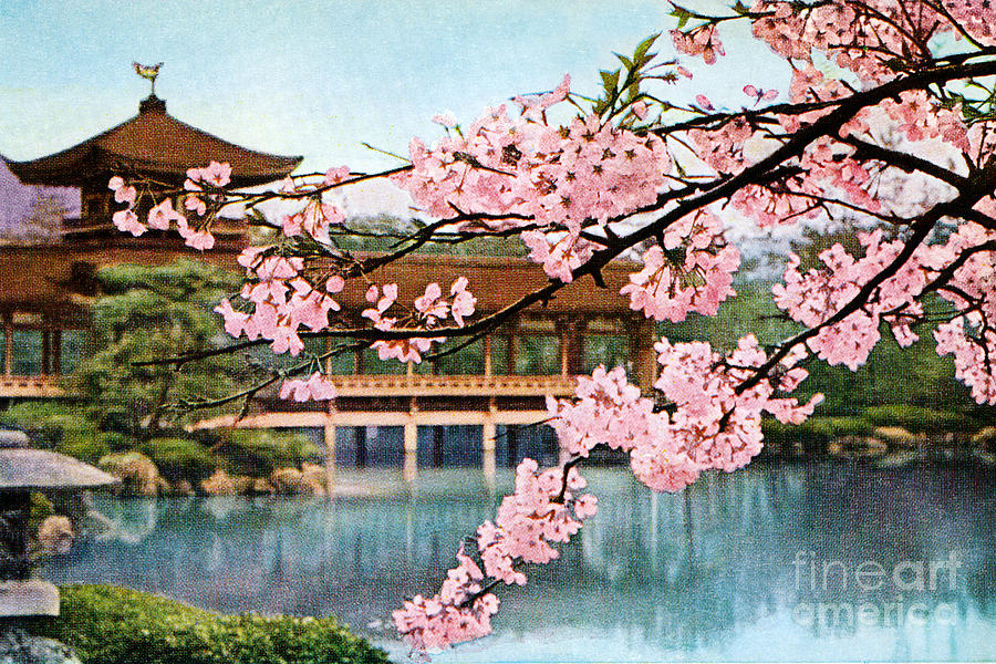simple japanese garden cherry blossom paintings mihrican with decor