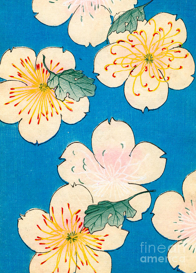 Flower Painting - Vintage Japanese Illustration Of Dogwood Blossoms by Japanese School