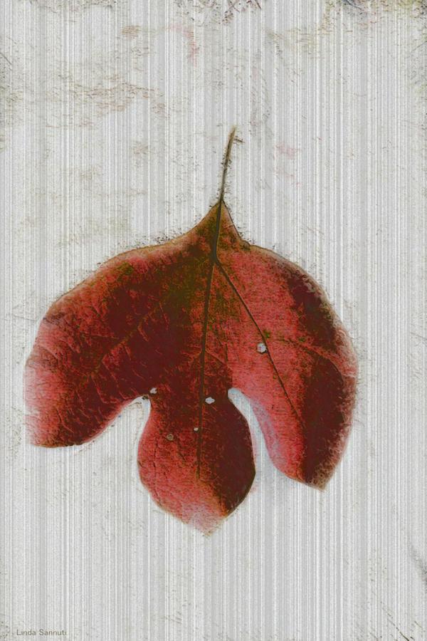 Leaf Photograph - Vintage Leaf by Linda Sannuti