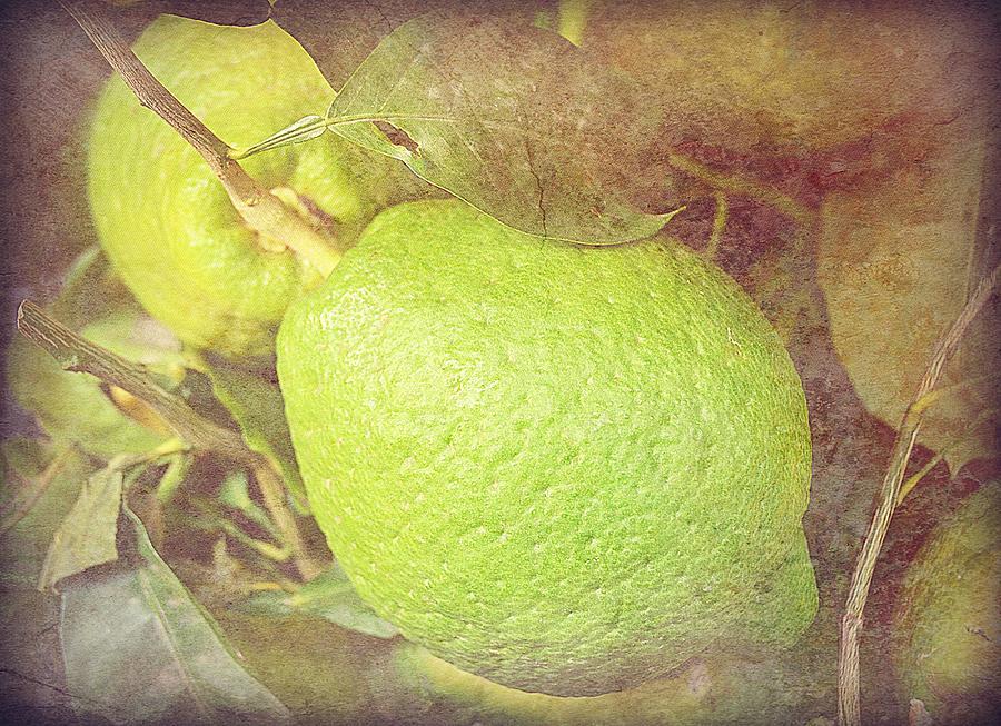 Vintage Lime 13