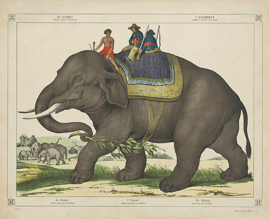 Vintage Painting Of Men Riding An Elephant Drawing