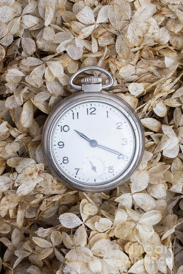 Still Life Photograph - Vintage Pocket Watch Over Dried Flowers by Edward Fielding