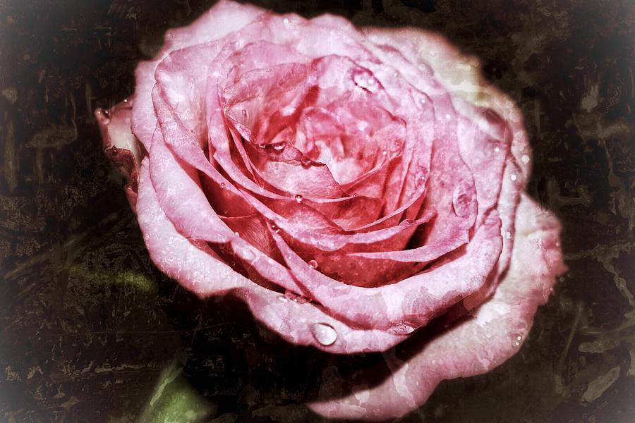 Vintage Digital Art - Vintage Rose by Sydney Otis