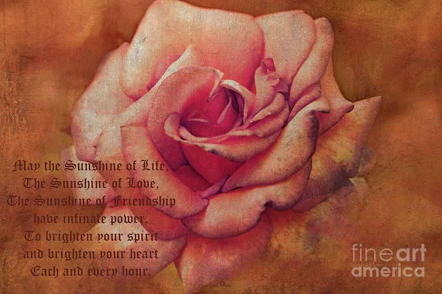 Vintage Rose with Text by Malanda Warner