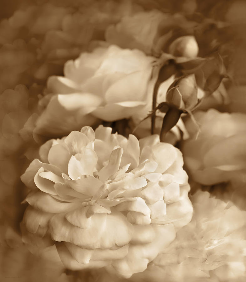 Vintage Roses Bouquet In Sepia Photograph By Jennie Marie Schell