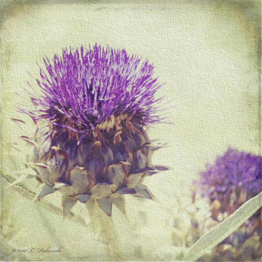 Thistle Photograph - Vintage Thistle by Laura Palazzolo