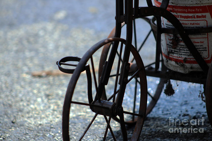 Vintage Tricycle 1 Photograph