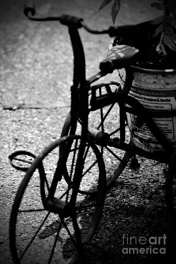 Vintage Tricycle Photograph