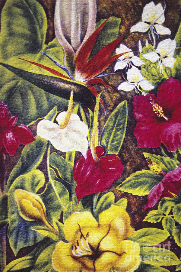 Vintage Tropical Flowers Painting by Hawaiian Legacy ...