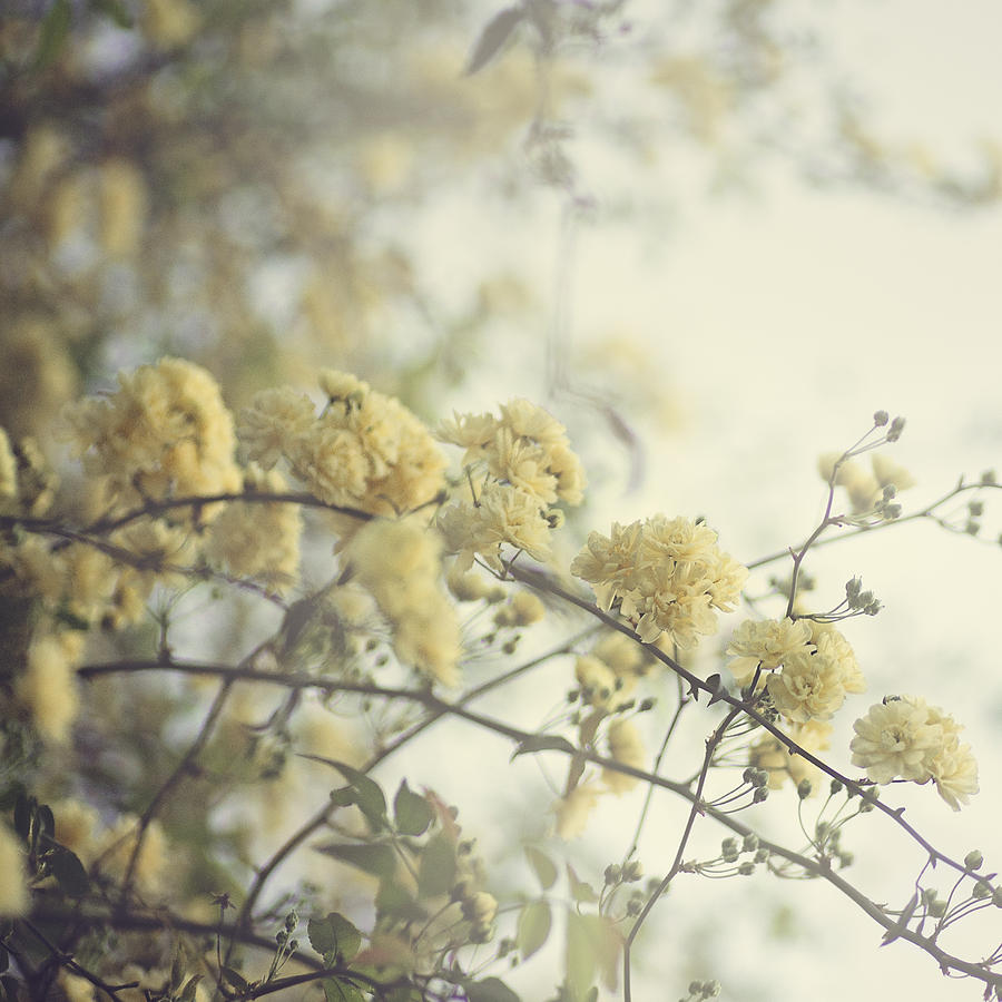 Vintage Yellow Flowers Photograph By Maleah Torney