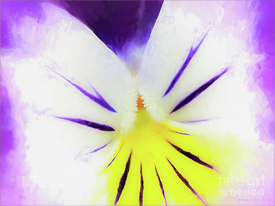 Violet Pansy Softness Photograph