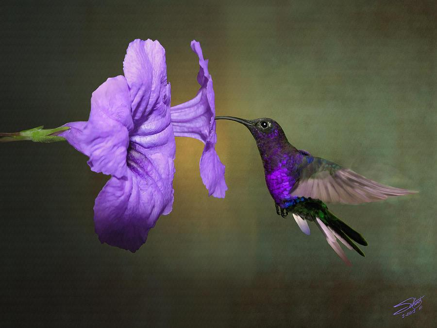 Violet Sabrewing Hummingbird by M Spadecaller