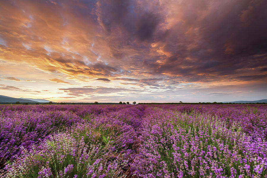 Bulgaria Photograph - Violet Sunrise by Evgeni Dinev