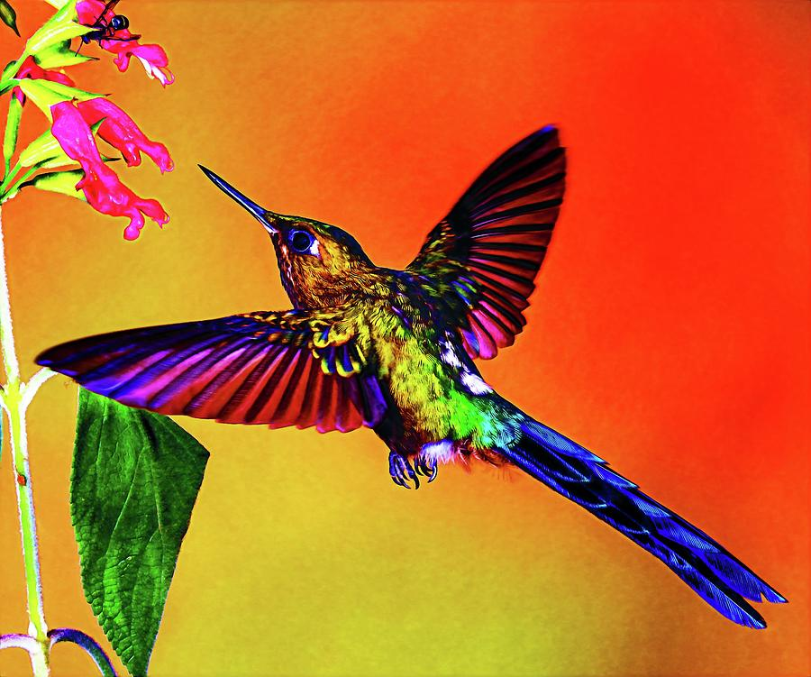 Violet sylph bird painting by david sanders for David sanders home designs
