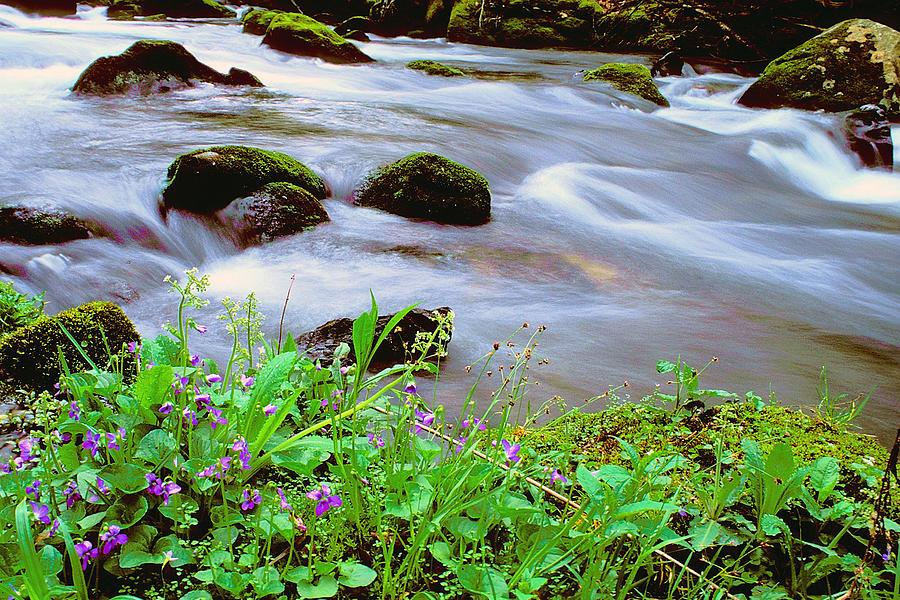 Steam Photograph - Violets Along Hazel Creek by Alan Lenk