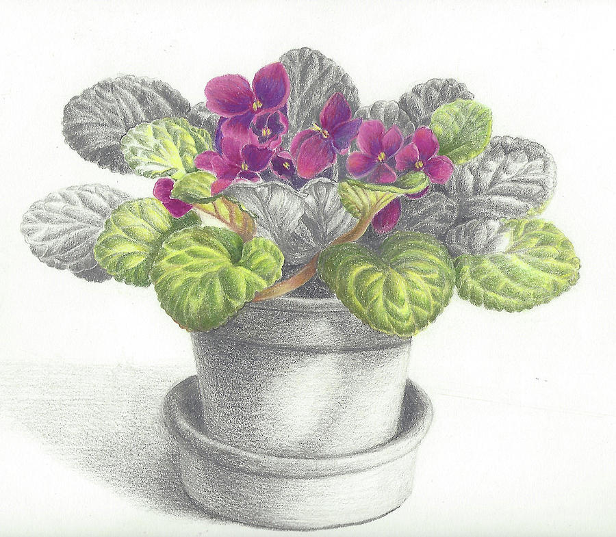 Violets Flowers Drawing | www.imgkid.com - The Image Kid ...