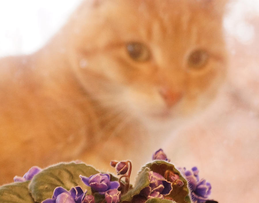 Orange Tabby Cat Digital Art - Violets with Cat by Jana Russon
