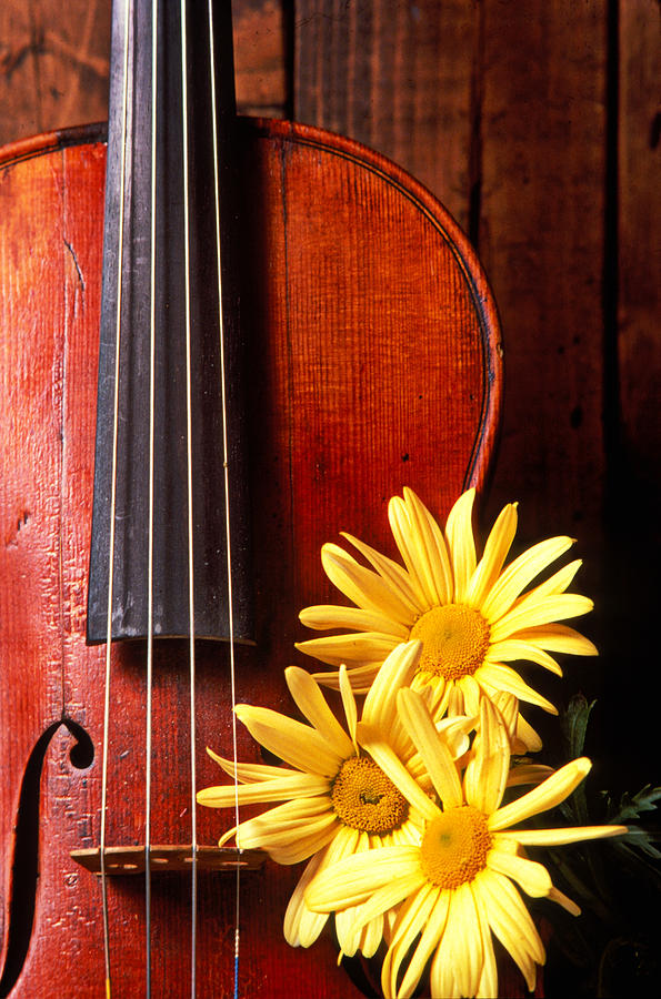 Violin Photograph - Violin With Daises  by Garry Gay