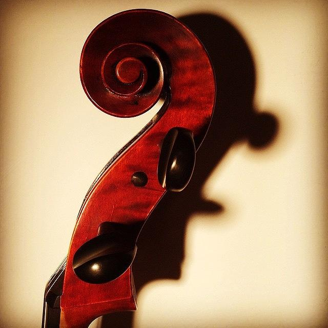 Violin Photograph - The Profile  by Jacob Smith
