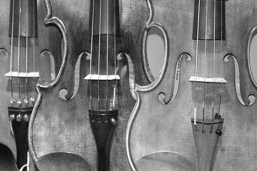 Violins Photograph - Violins by Paul Farrier