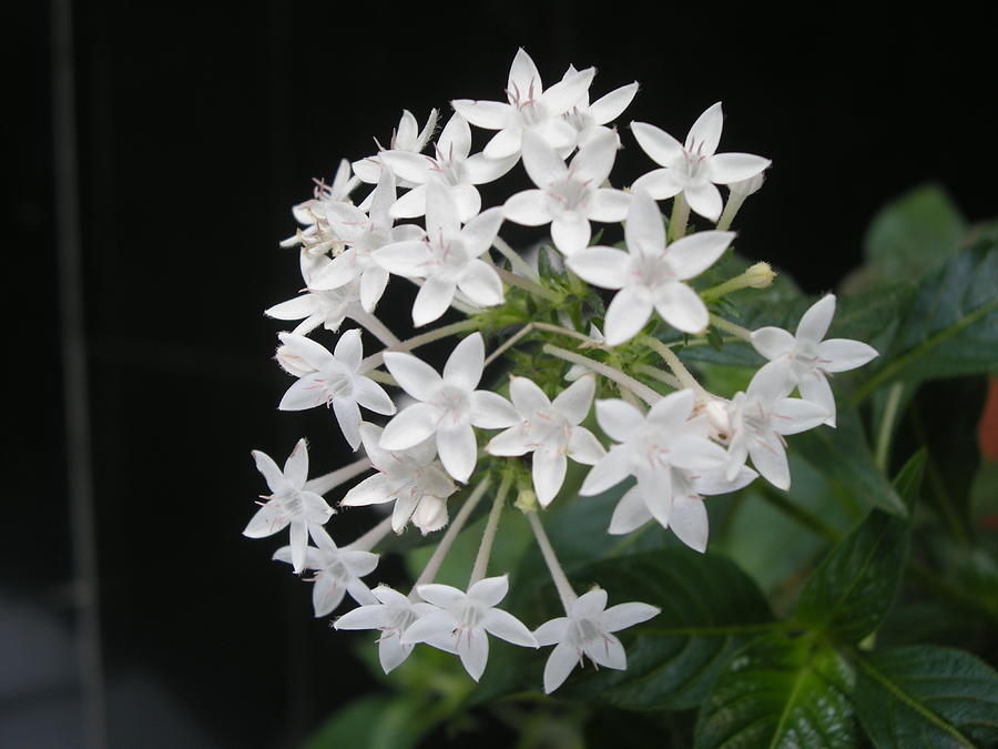 White Flower Photograph - Virgin Creation by Aim to be Aimless