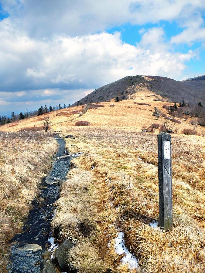 Virginia Bald Appalachian Trail by Glenn Gordon