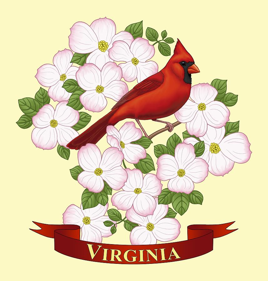Virginia Painting - Virginia State Bird Cardinal And Flowering Dogwood by Crista Forest