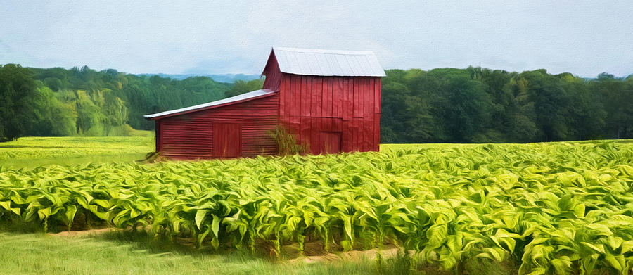 Virginia Tobacco Barn Photograph By Cindy Archbell