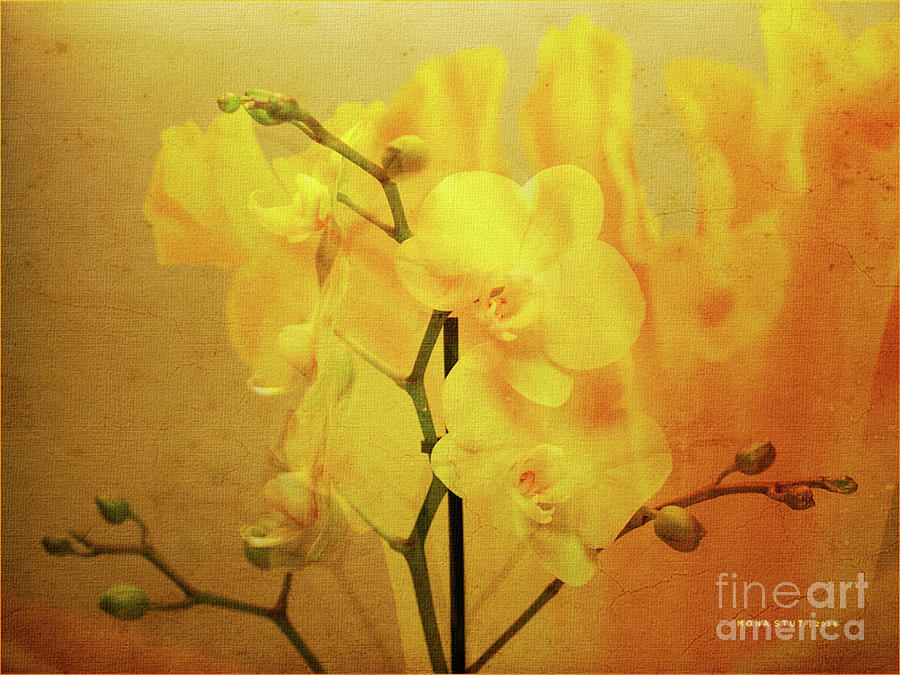 Yellow Visions Of Spring Orchids Photograph