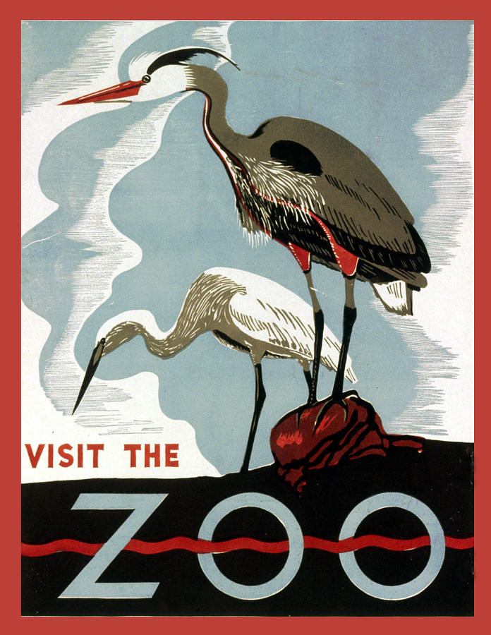 Visit The Zoo Egrets Digital Art - Visit The Zoo Egrets  by Unknow