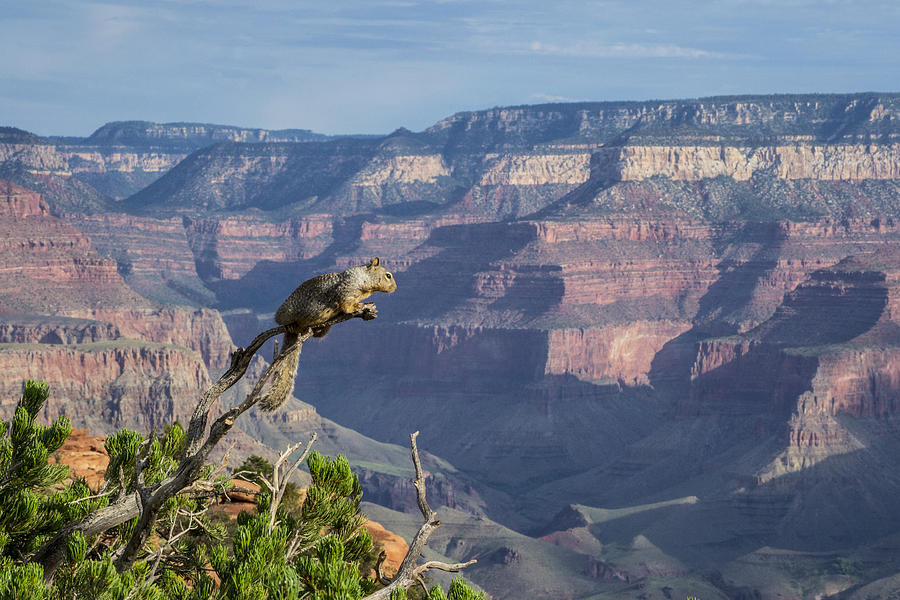 Landscape Photograph - visit to Grand Canyon  by Atul Daimari