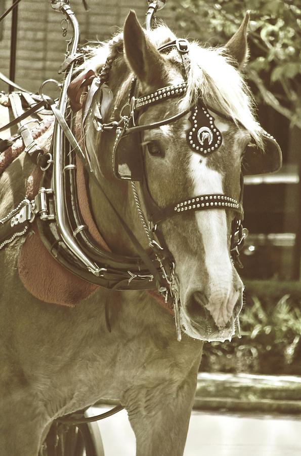 Carriage Photograph - Visiting Savannah  by Dressage Design