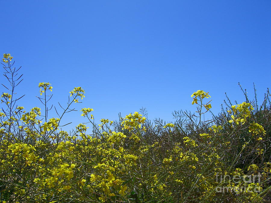 Flowers Photograph - Vista Flores by Jim Thomson