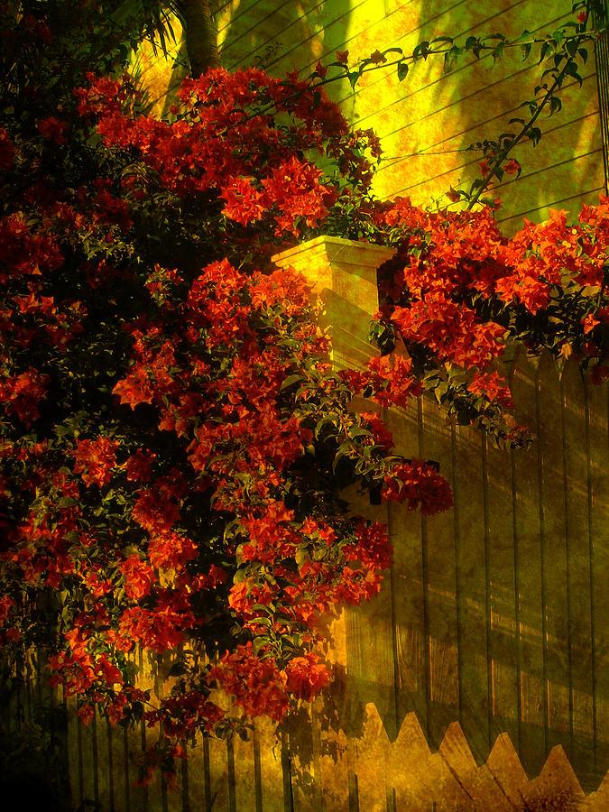 Flower Photograph - Viva La Nostalgia by Susanne Van Hulst