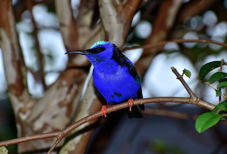 Bird Photograph - Vivid Blue by Johanne Daniel