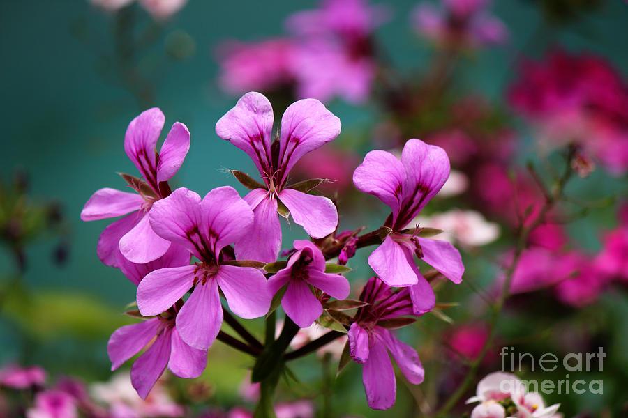 Vivid Spring Colors by Jackie Farnsworth
