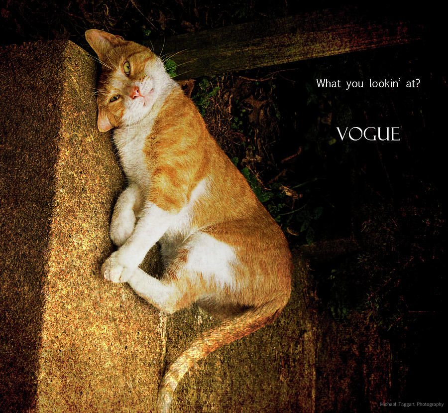 Cat Photograph - Vogue by Michael Taggart II